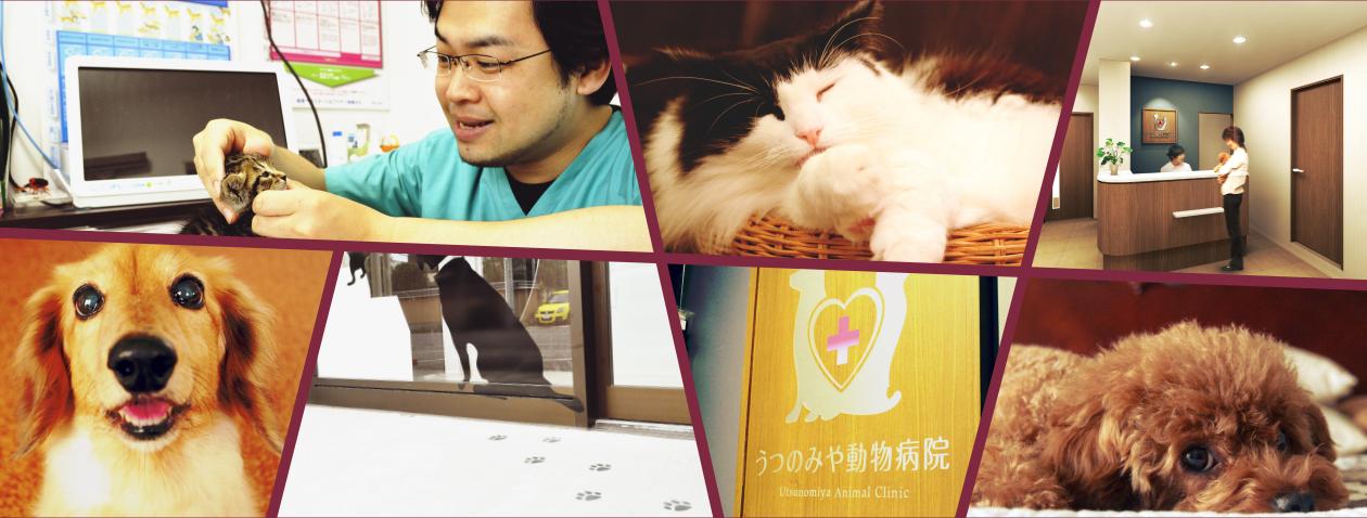 うつのみや動物病院 Utsunomiya Animal Clinic